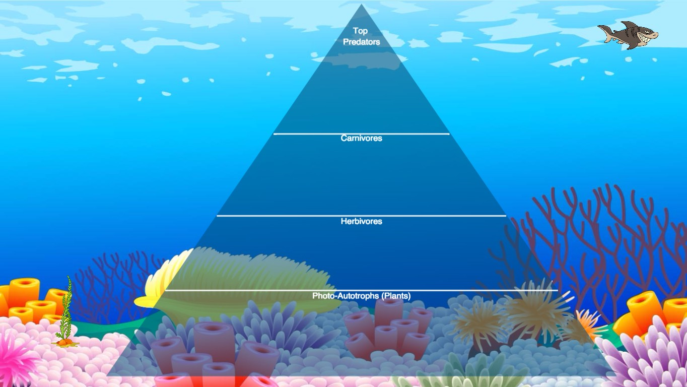 Ocean Ecological Pyramid