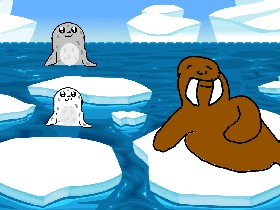Seals and Walrus