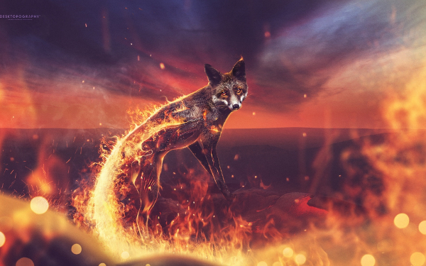 background scene - Fire-Fox-HD-Graphic-Background