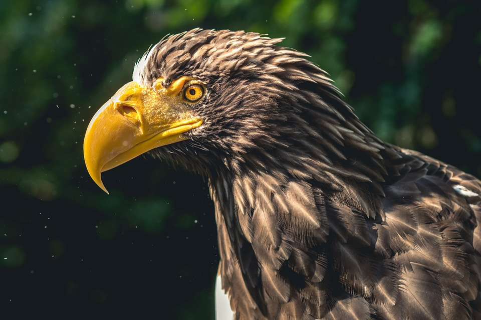 background scene - eagle-2657888_960_720