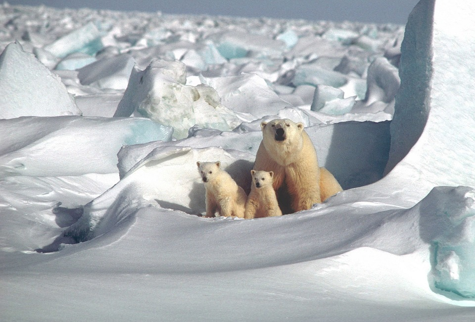 background scene - polar-bear-1509103_960_720