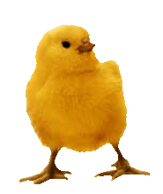 Clicker - Yellow Chick