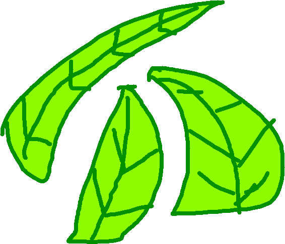 Leaf Blade - drawing