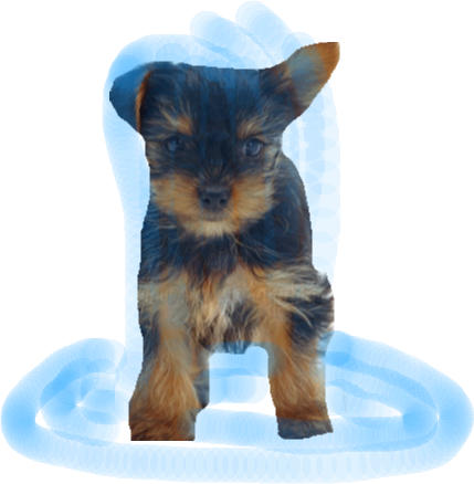 Puppy 2 - image copy